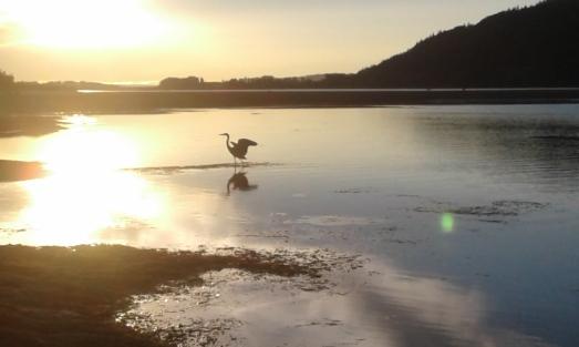 """Heron About to Take Flight"" photo by Bea Garth, copyright 2016"