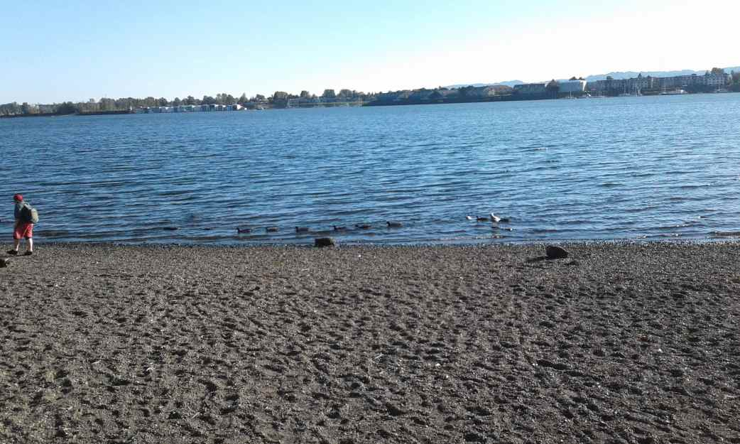 """""""woman with ducks trailing"""" Vancouver, WA photo by Bea Garth, copyright 2016"""