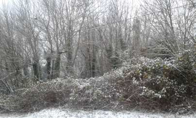 """""""Snowy Bramble and Trees,"""" photo of Vancouver, WA by Bea Garth, copyright 2016"""
